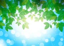 Mooie de zomerachtergrond met bladeren op branche Royalty-vrije Stock Foto