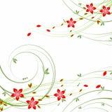 Mooie de zomerbloemen Stock Foto