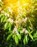 Mooie de zomerbloemen met groene achtergrond royalty-vrije stock fotografie