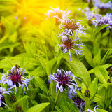 Mooie de zomerbloemen met groene achtergrond royalty-vrije stock foto