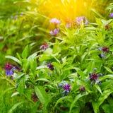 Mooie de zomerbloemen met groene achtergrond royalty-vrije stock afbeeldingen