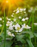 Mooie de zomerbloemen met groene achtergrond stock fotografie