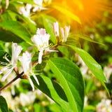 Mooie de zomerbloemen met groene achtergrond stock foto