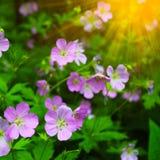Mooie de zomerbloemen met groene achtergrond royalty-vrije stock afbeelding