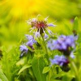 Mooie de zomerbloemen met groene achtergrond royalty-vrije stock foto's