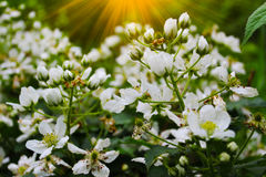 Mooie de zomerbloemen met groene achtergrond stock afbeeldingen