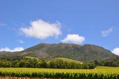 de zomer in de wijngaarden in franschhoek stock foto