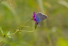 Mooie de zomervlinder royalty-vrije stock foto