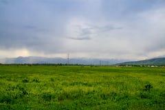 Mooie de zomerweide met groen gras en lage wolken Stock Afbeelding