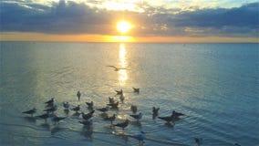 Mooie de zon vastgestelde scène van de strandkust met zich zeemeeuwen het verzamelen stock afbeelding