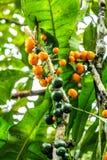 Mooie detailfoto van groene en gele citroenen stock foto