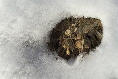 Mooie details van wit smeltend sneeuw en gras in het bos op warme zonnige de lentedag Royalty-vrije Stock Foto's