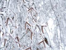 Mooie die berktakken met zaden met sneeuw worden behandeld royalty-vrije stock fotografie