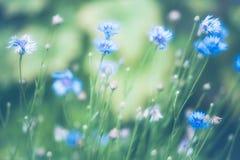 Mooie die bloem met zachte filter wordt gemaakt Stock Afbeelding