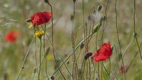 Mooie die bloemen in lang gras worden gevonden stock videobeelden