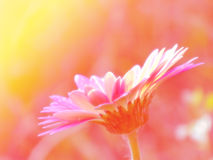 Mooie die bloemen met de achtergrond van kleurenfilters worden gemaakt Stock Foto's