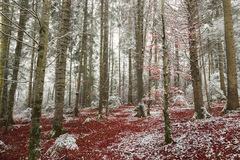 Mooie die bomen in sneeuw worden behandeld Royalty-vrije Stock Foto's