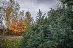 Mooie die de herfstbomen en struiken in het bos de sleep met gevallen bladeren wordt behandeld stock foto's