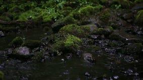 Mooie die kreek in de regen met stenen met groen mos worden behandeld stock footage