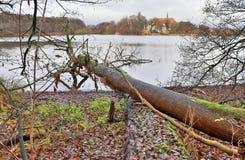 Mooie die kroon van een boom in de herfst wordt genomen royalty-vrije stock foto