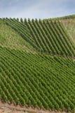 Mooie die Patronen door Wijngaarden op hellingen van Bopparder Hamm over de Rijn-Vallei worden gecreeerd, Duitsland Royalty-vrije Stock Afbeelding