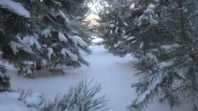 Mooie die snow-covered bomen en pijnboomnaald met rijp wordt behandeld stock video