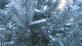 Mooie die snow-covered bomen en pijnboomnaald met rijp wordt behandeld stock videobeelden