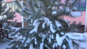 Mooie die snow-covered bomen en pijnboomnaald met rijp wordt behandeld stock footage