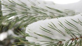 Mooie die spar met sneeuw, dichte omhooggaande mening wordt behandeld stock footage