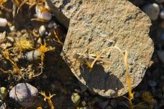 Mooie die sprinkhaan in Adiyaman wordt gevonden royalty-vrije stock foto's
