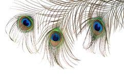 Mooie die veer van een pauw op wit wordt geïsoleerd Stock Afbeelding