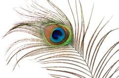Mooie die veer van een pauw op wit wordt geïsoleerd Stock Fotografie