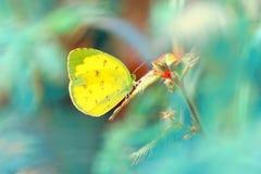 Mooie die vlinder op blad wordt neergestreken Stock Foto's