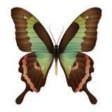 Mooie die vlinder op een witte achtergrond wordt geïsoleerd Stock Foto's