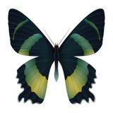 Mooie die vlinder op een witte achtergrond wordt geïsoleerd Royalty-vrije Stock Foto's