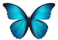 Mooie die vlinder op een witte achtergrond wordt geïsoleerd Stock Afbeeldingen