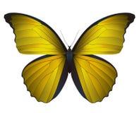 Mooie die vlinder op een witte achtergrond wordt geïsoleerd Royalty-vrije Stock Afbeelding