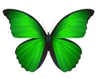 Mooie die vlinder op een witte achtergrond wordt geïsoleerd Royalty-vrije Stock Foto