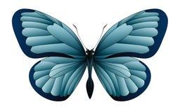 Mooie die vlinder op een witte achtergrond wordt geïsoleerd Stock Afbeelding