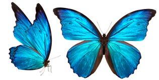Mooie die vlinder op wit wordt geïsoleerd Stock Foto