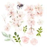 Mooie die waterverf met de lentebloemen en bladeren wordt geplaatst stock illustratie