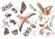 Mooie die waterverf met vogels, buterfly, bij en libel wordt geplaatst stock illustratie