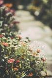 Mooie die wildflowers met een zachte uitstekende filter wordt gedaan Royalty-vrije Stock Afbeeldingen
