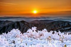 Mooie die zonsopgang op Deogyusan-bergen met sneeuw in de winter worden behandeld, Korea royalty-vrije stock afbeeldingen