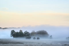 Mooie dikke wi van het het plattelandslandschap van Autumn Fall van de mistzonsopgang Royalty-vrije Stock Fotografie