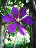 Mooie donkere purpere bloem Stock Foto