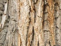 Mooie donkere textuur van de boomschors, achtergrond Stock Foto's
