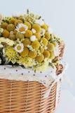 Mooie droge bloemen Royalty-vrije Stock Fotografie