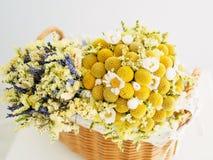 Mooie droge bloemen Stock Fotografie