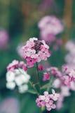 Mooie dromerige rode roze wilde bloemen, onscherpe achtergrond Royalty-vrije Stock Foto